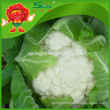 Best white cauliflower